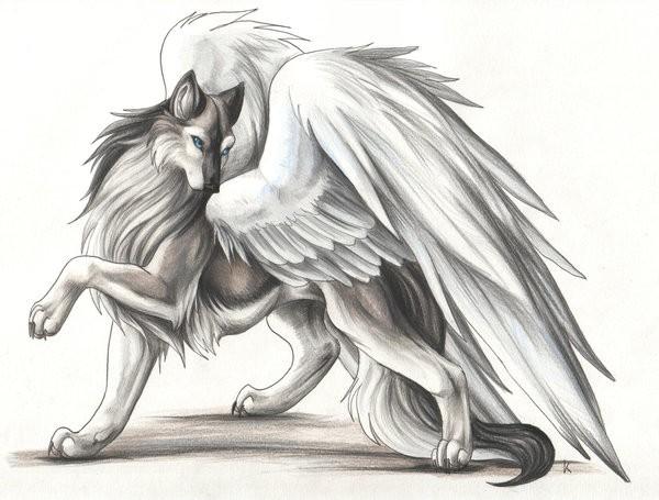 картинки волки с крыльями аниме
